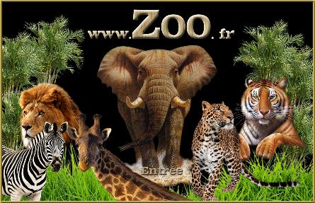 Parc animalier, création de votre site en paca